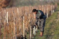 monteru-vineyard-taille-1.jpg