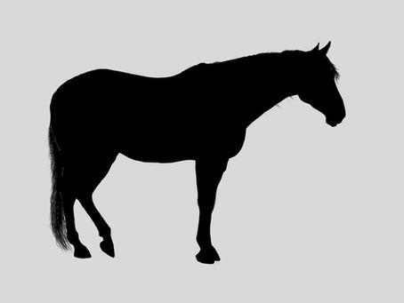 Feral Horses: Adaptation Plan - Goals and Adaptation Strategies