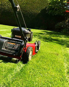 lawn-mowing-backyard1800.jpeg