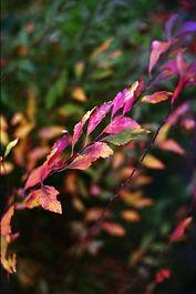 leaves034 LC10.jpg