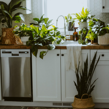 Best Plants to Purify the Air in Your Home