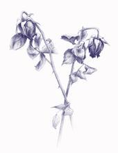 floruusutsin.jpg