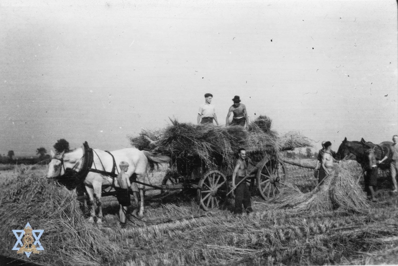 עבודות בחווה חקלאית