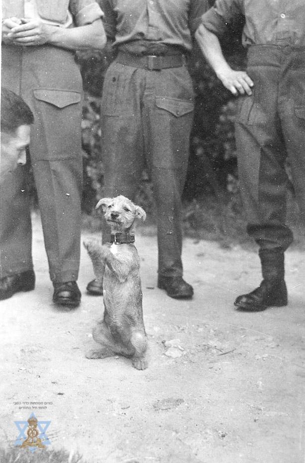 כלב מחמד במחנה השבויים
