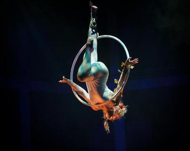 Persephone Aerial Hoop