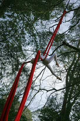 Silks performance rigged from a tree