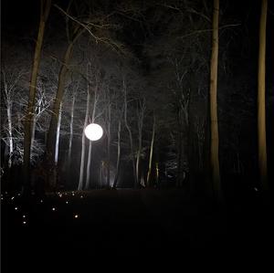 Candlelit woods
