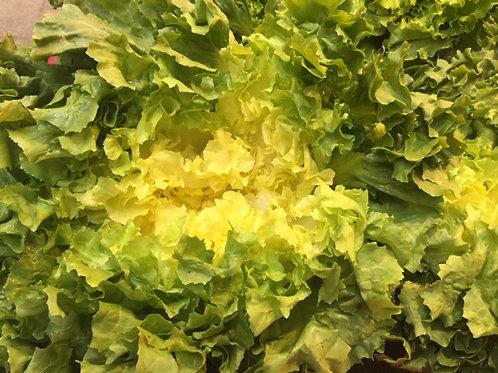 salade scarole ( la pièce)