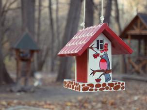 В это воскресенье - птицы в Нескучном саду