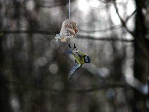 Пернатые новости Битцевского леса