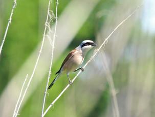 Птицы Щукинского полуострова 25-го июля