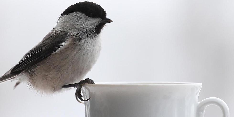 Кофе-брейк с орнитологом: специфика осеннего бёрдвотчинга в Москве