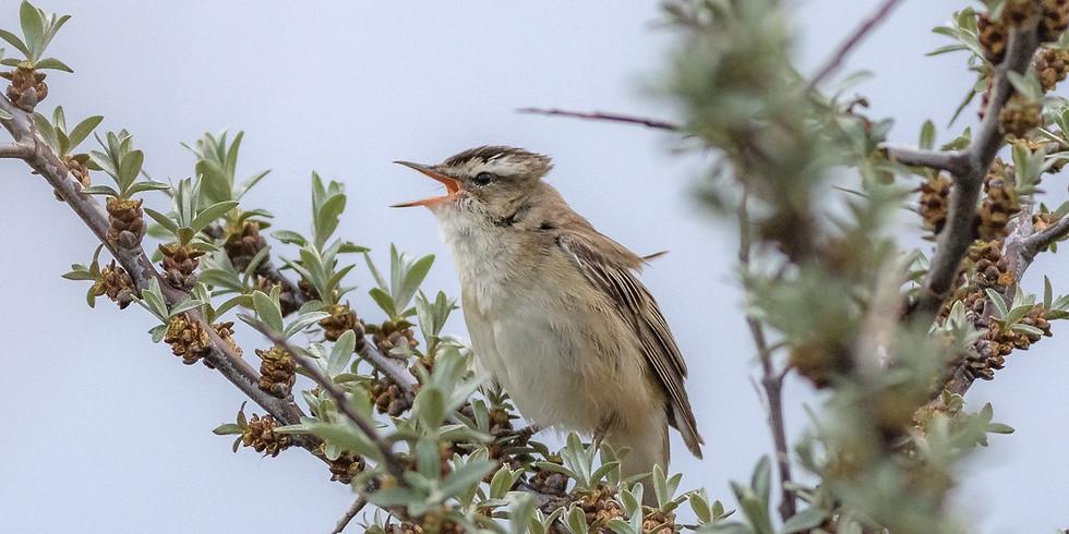 Вечерние птицы Главного ботанического сада
