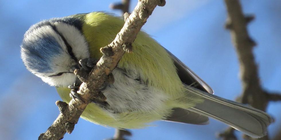 Птицы зимнего Царицыно