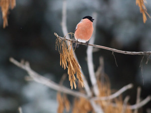 Птицы в Битцевском лесу в субботу