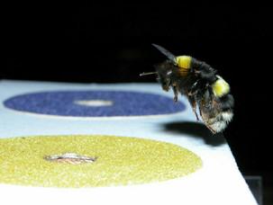 Лекция о насекомых-интеллектуалах в пятницу!