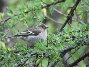 7 июля: Птицы и достопримечательности Битцевского леса