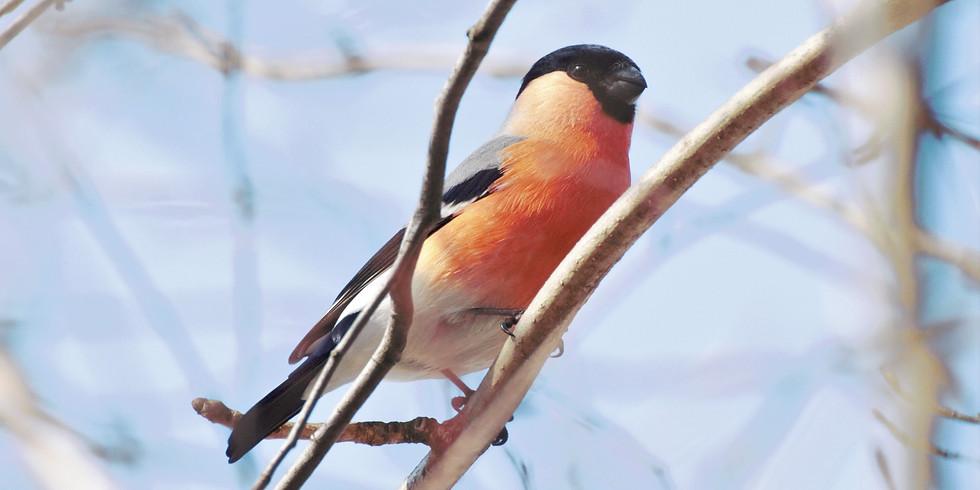 Новогодние птицы Измайлово🎄
