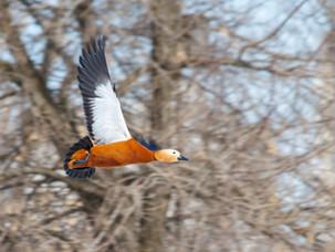 Околоводные птицы парка Коломенское