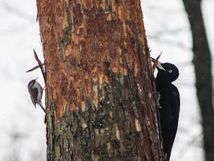 Птицы парка Покровское-Стрешнево