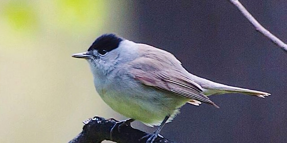 Птицы Щукинского полуострова
