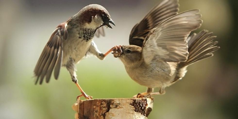 """Вечерняя лекция в среду: """"Птицы-феминистки: имеют ли самки право голоса"""""""