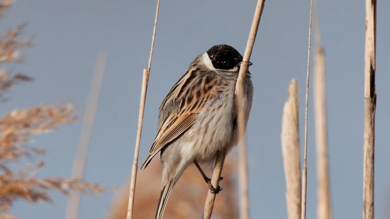 Миграция птиц в Лосином острове