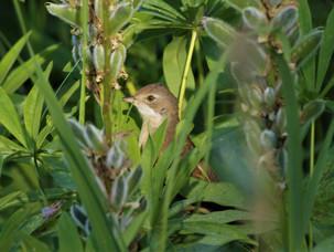 Песни птиц в Измайловском парке