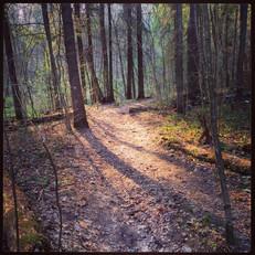 Лесными тропами