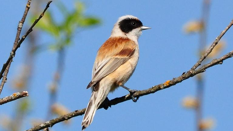 Заповедное Полистовье: орнитологическая экспедиция