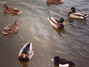 Птицы в Нескучном - отчёт
