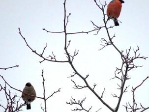 Птицы скверов МГУ и секреты их личной жизни