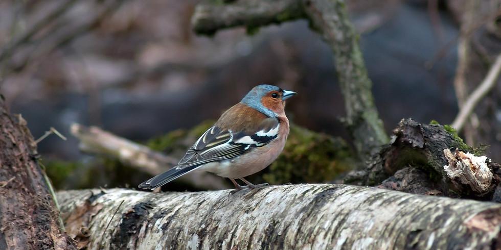 Птицы парка Кусково
