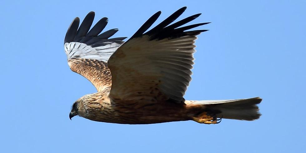 Птицы острова Лохин