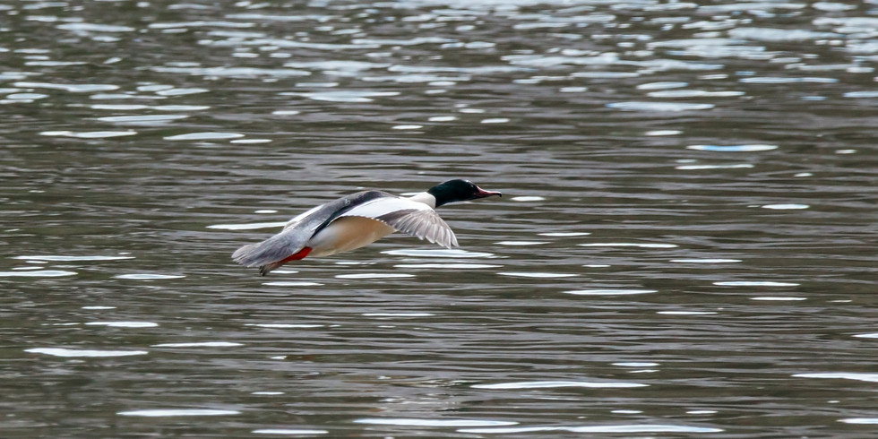 Зимующие птицы парка Коломенское