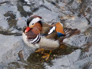 Птицы Кузьминского парка