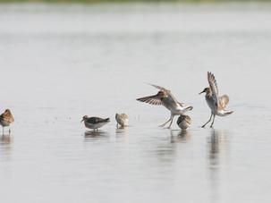 Осенний пролёт птиц в Лотошино 12-го сентября 🕊