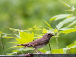 В воскресенье идем слушать птиц в Измайлово!