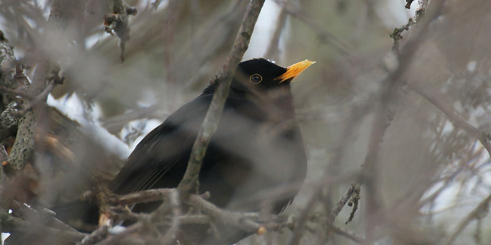 Новогодние птицы Битцевского леса🎄