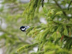 Птицы Покровского-Стрешнево в воскресенье