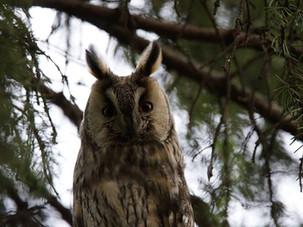 Экскурсии по птицам в Ботаническом саду МГУ