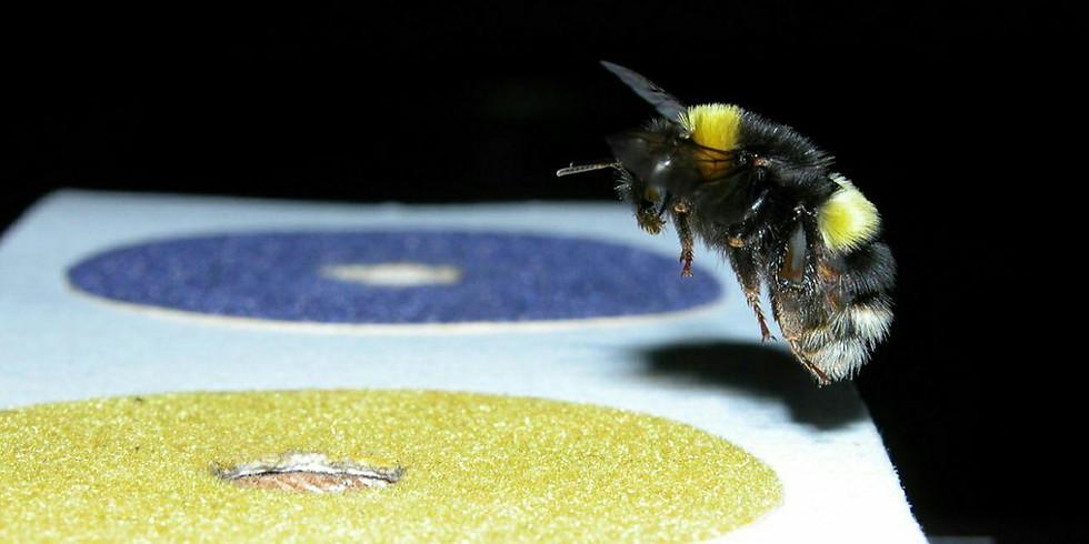 Лекция о насекомых-интеллектуалах
