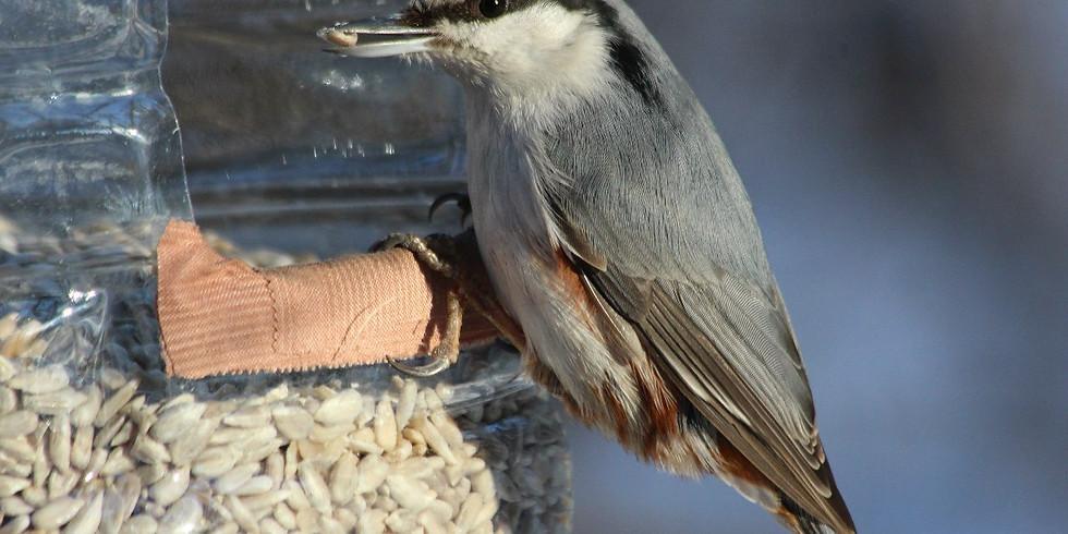 Бёрдвотчинг в Измайловском парке: чем кормить птиц зимой?