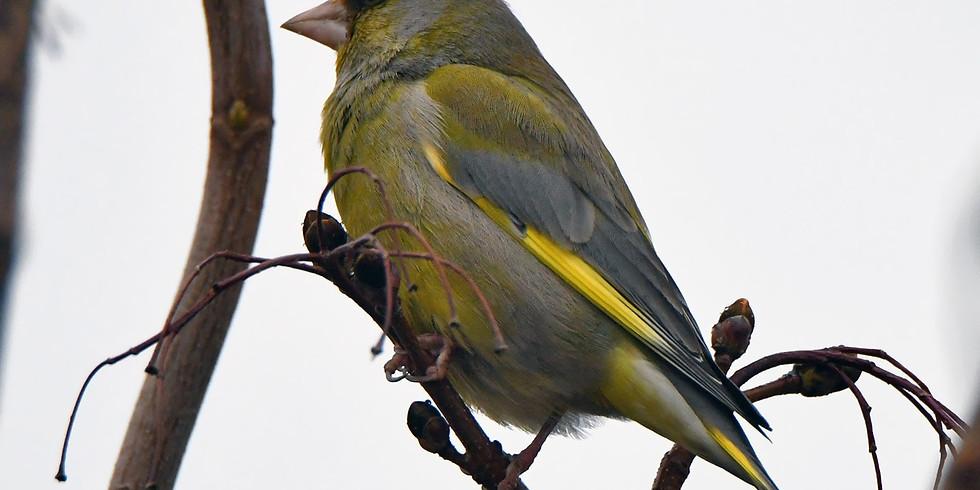 Воскресные птицы Измайловского парка
