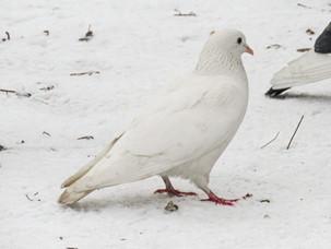 Птицы в скверах Московского университета в воскресенье