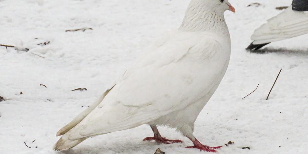 Птицы в скверах Московского университета