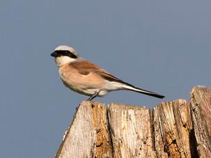 Птичий вечер в Битцевском лесу - отчёт