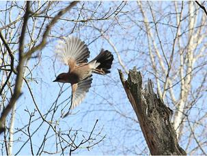 Птицы Воробьевых гор