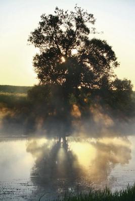 Москва-река утром