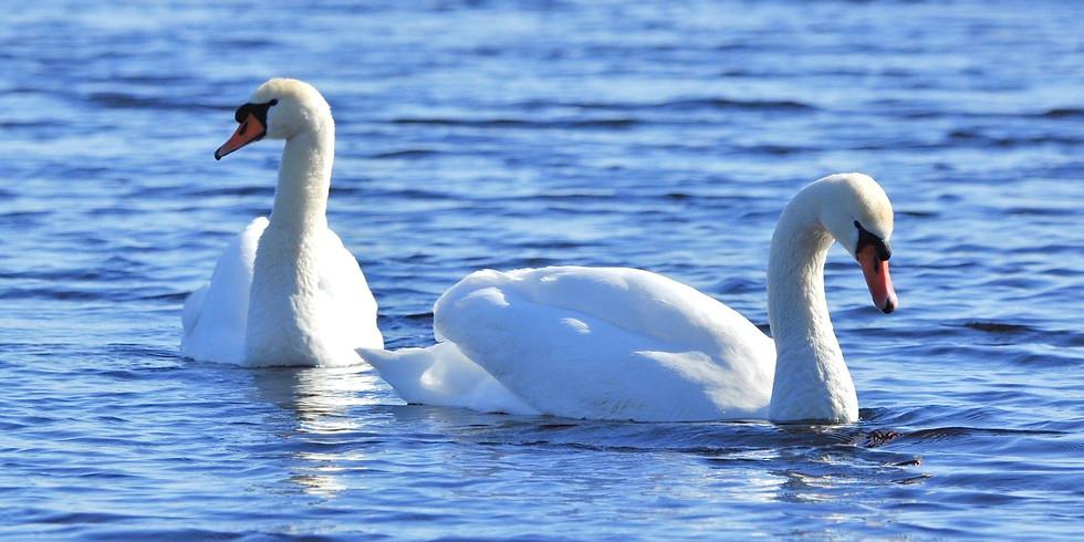 Птицы Коломенского парка
